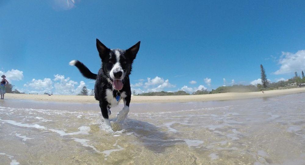 spiagge follonica animali