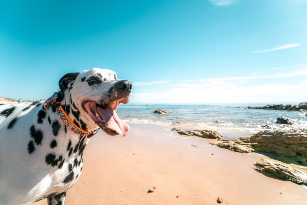 spiagge a follonica per animali